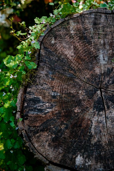 Nature Is Ancient - Emily O'Donnell's Fine Art Photography
