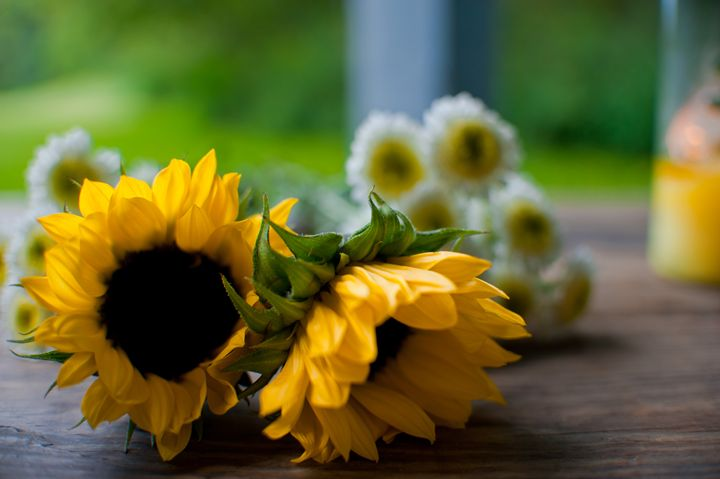Sunflowers - Emily O'Donnell's Fine Art Photography