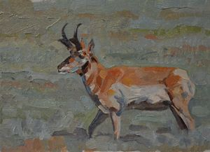 Prairie Goat - Scott Scherer Fine Art