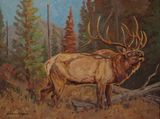 bull elk oil painting