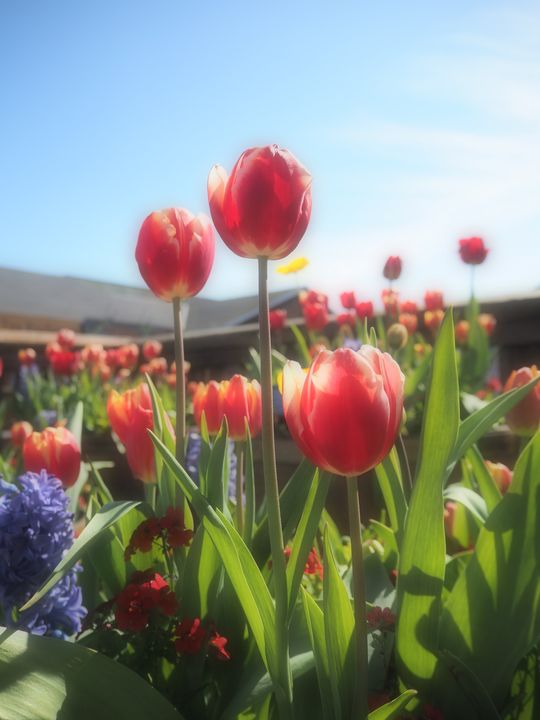 A Sunny Day at Pier 39 - Glomes en Voyage