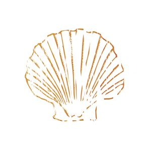 Orange Seashell.