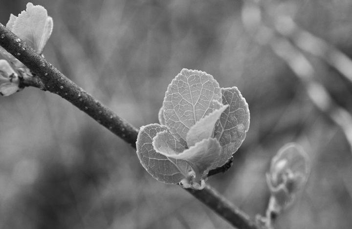 Little Plant - Erin Gardner