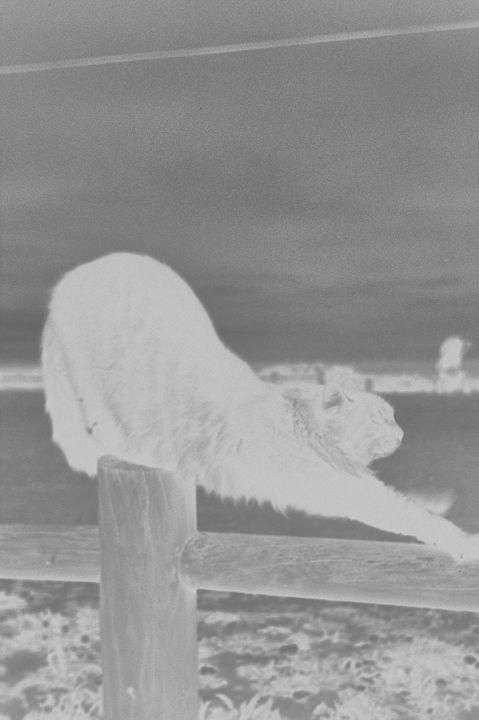 Negative Cat Stretch - Mia Persson