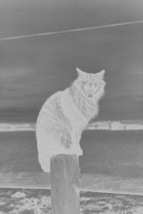 Negative Cat Yawn - Mia Persson