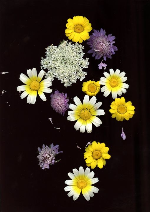 Scan flowers - Mia Persson