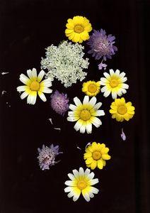 Scan flowers