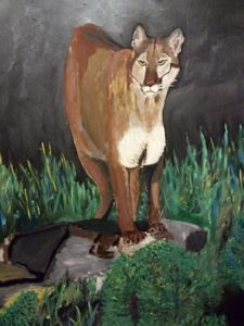 Mountain Lion in the Eve