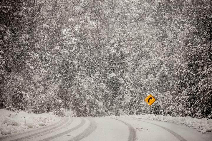 Forest road - Ale Moraes Fine Art Photography