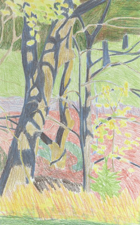 Tree in Shadow - Bethany Lee's Colored Pencil Landscapes