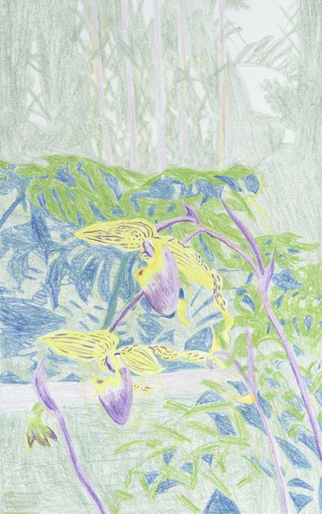 Orchids - Bethany Lee's Colored Pencil Landscapes