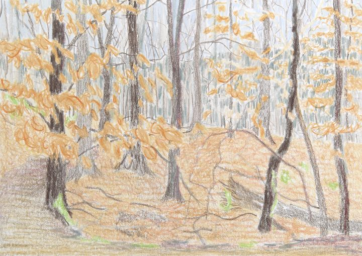 Rock Creek Forest - Bethany Lee's Colored Pencil Landscapes