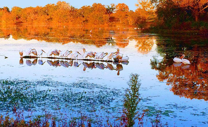 Sally's Pelicans - Pedro Cobian