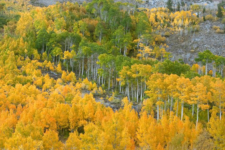 Sierra Autumn Colors - Ram Vasudev