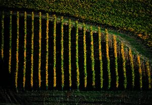Autunno 0714 - the seasons in chianti