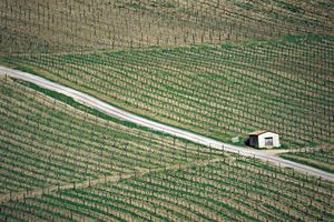 Chianti 12 - the seasons in chianti