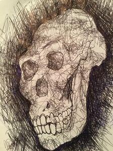 australopithecus afarensis print