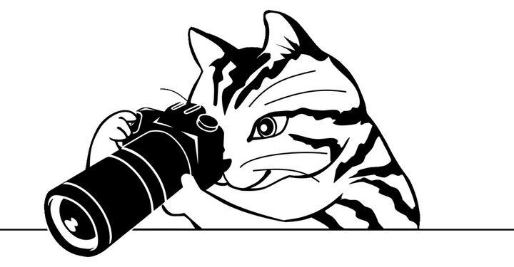 Camera Cat - Enigma