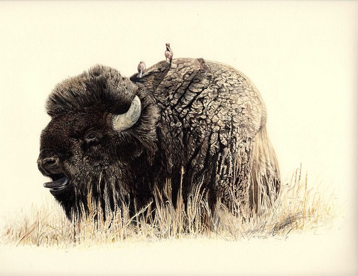 Bellowing Bison - Emma Mooring