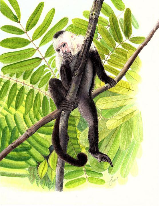 White Faced Capuchin - Emma Mooring