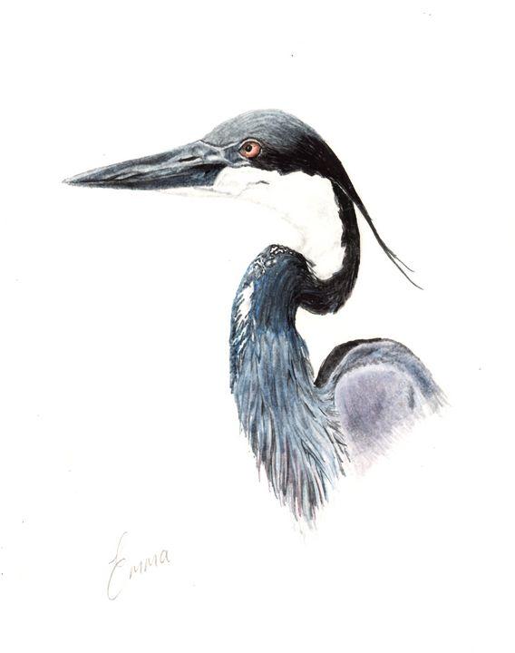 Black Headed Heron - Emma Mooring