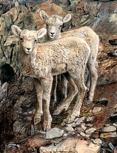 Bighorn Sheep Lambs