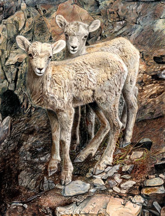 Bighorn Sheep Lambs - Emma Mooring