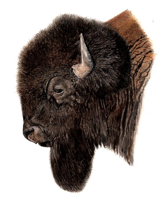 Bison Bull - Emma Mooring