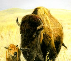Bison Cow and Calf in the Sandhills