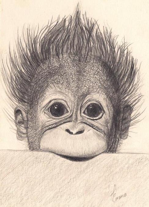 Baby Orangutan - Emma Mooring