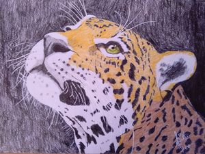 Aspiration in leopard's eyes