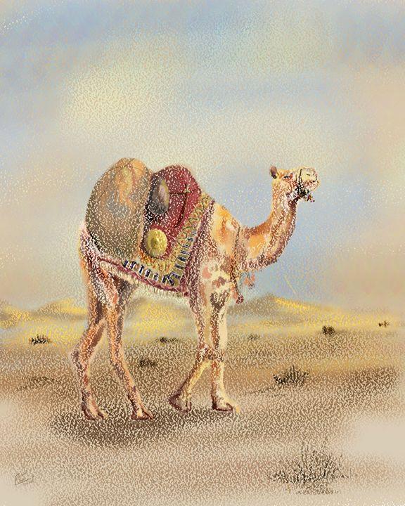 Camel in Desert - Junaid Ameer Work