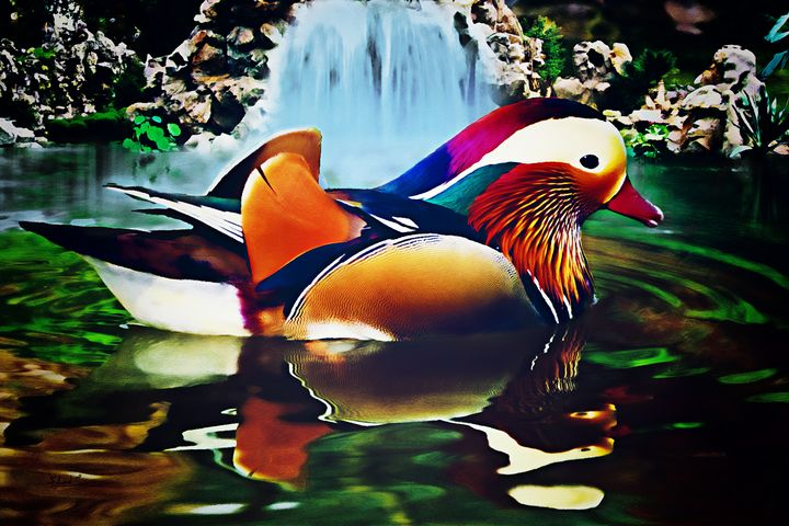 Mandarin Duck - EJL Designs