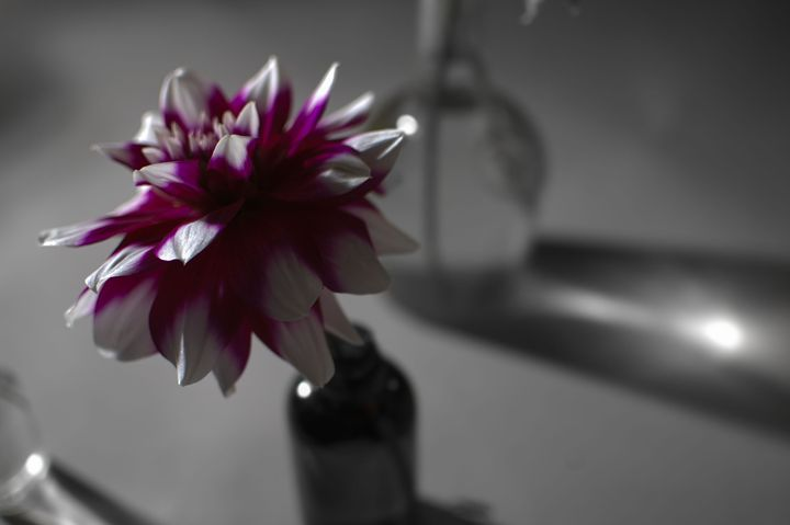 The Beginning of Color - Photography