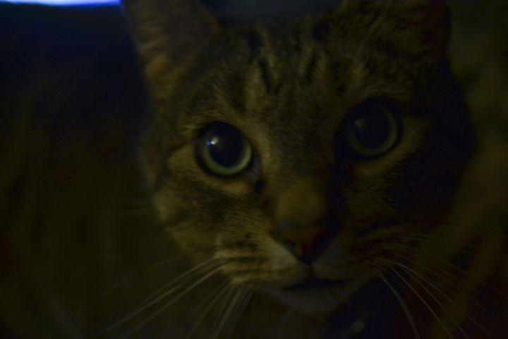 """Sebastian"" A pretty kitty - Photography"