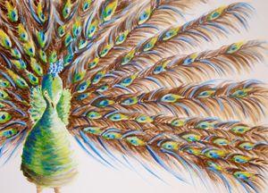 Peacock Attitude - Kris W