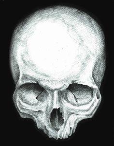 Skull study No.4