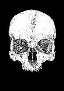 Skull Study No.5
