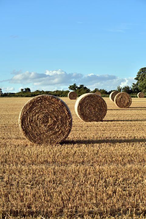 Harvest Time - MonksArt