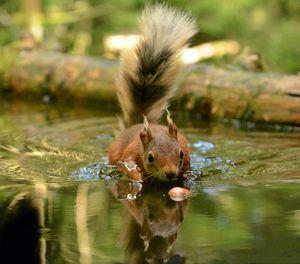 Splashy Squirrel - MonksArt