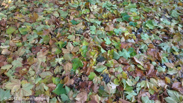 Colourful Autumn Leaves - Eamonn Mulligan