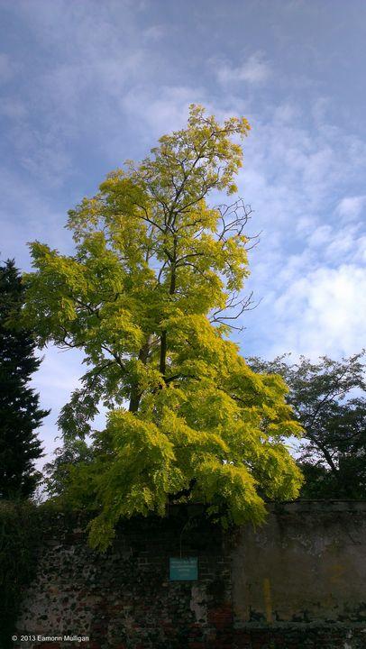 Tree - Eamonn Mulligan