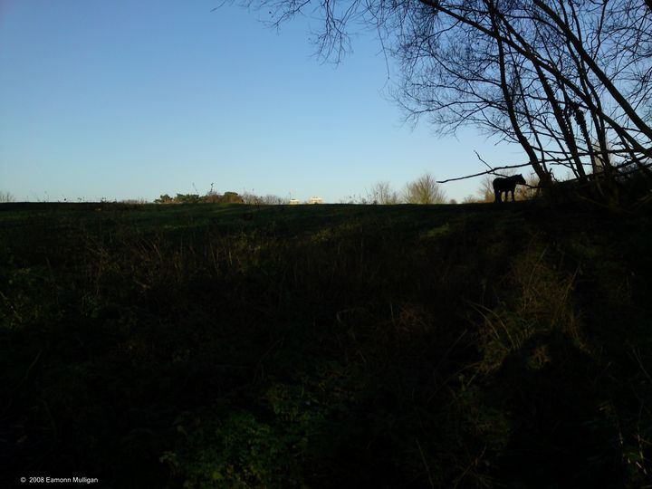 The Lone Horse - Eamonn Mulligan