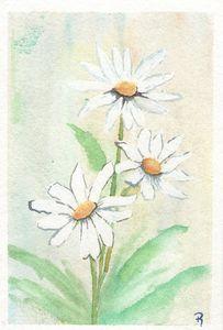 Daisies - Royall Colors Art