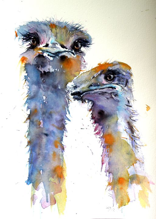 Ostriches - kovacsannabrigitta