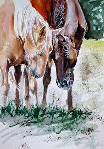 Horses friend