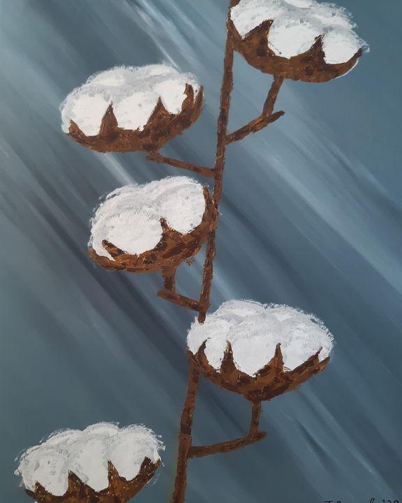 Cotton - Setati