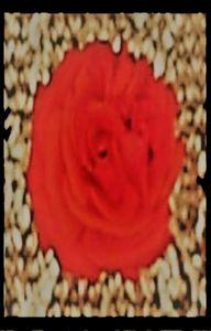 Red Wallflower