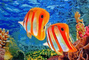 Reef Patrol - John Jaster