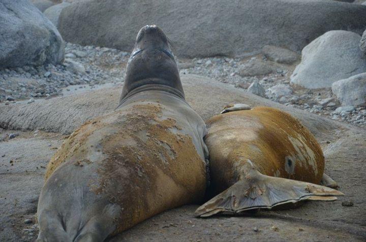 Seal pups in the sun - My life through a lens